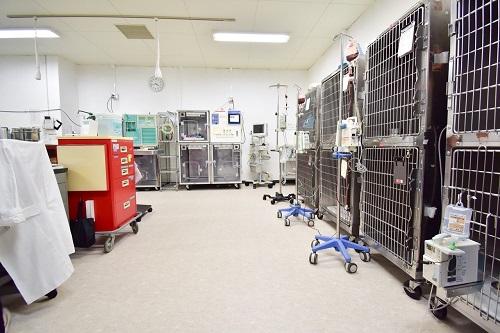 入院用動物ケージの写真.jpg