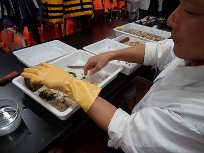 神奈川県立海洋科学高等学校教員による真珠の収穫.jpg