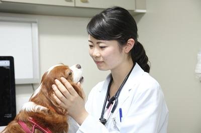 写真:診察中の獣医師